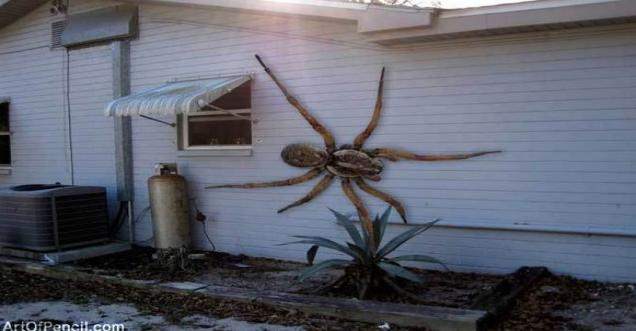 Fact Check Angolan Witch Spider In Texas Larger To Eat
