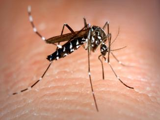 5 reasons why mosquitoes bite you more?