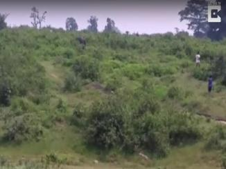 WARNING Video: Never fool around with Beast like elephant