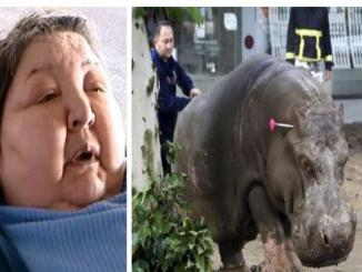 Fact Check: Did 400-pound woman sue Paris Zoo, hippo tried rape her