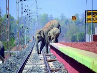 Facts Check: Did elephants cross a railway track, Sanctuary Asia, true