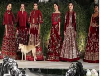 Did dog really walk in Siddharth Malhotra ramp show?