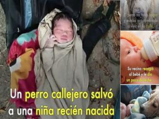 Was a Newborn Baby Saved By Stray Dog