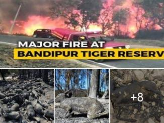 Bandipur forest fire animals caught images shared on social media are fake