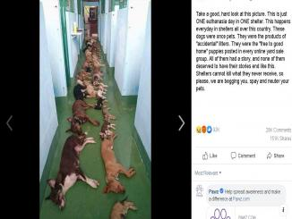 Routine dogs euthanizations picture from a shelter home