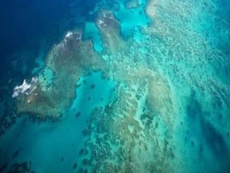 Is the Great Barrier Reef is dead