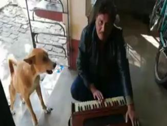 The Dog sang Ranu Mandal song, thinking he can be famous as well