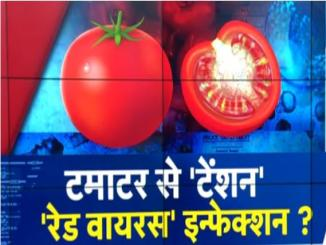 Tiranga or Red Virus Destroying Tomato Crops in Maharashtra