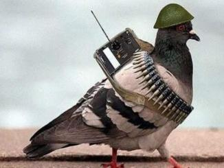 /facts-check/suspected-spy-pigeon-from-pakistan-captured-along-ib-in-kathua-15904.html