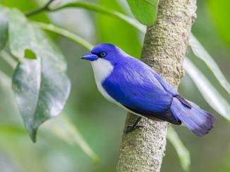 /trending/have-you-seen-the-natures-8-amazing-top-bluebirds-soo-beautiful-15905.html