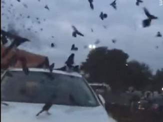 Did Crows Attack Supermarket in Saudi Super Market