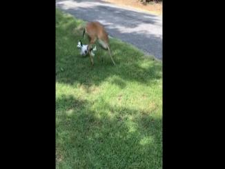 Rumble / Funny & Cute Animals — Occurred on July 23, 2018, / Yantis, Texas, USA